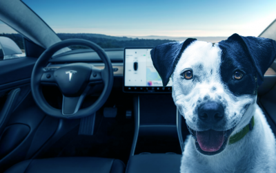 The dog friendly Electric Car!
